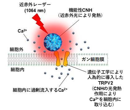 Figure1_20200817_miyako.jpg
